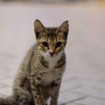 Dubai - Gas station kitten